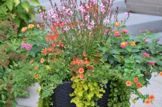 A planting of bright flowers in a container planting.